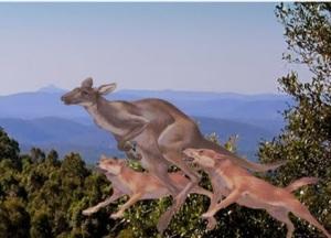 Koorumbyn - Kangaroo
