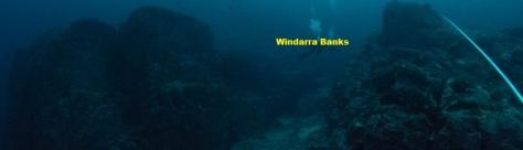 windarra banks