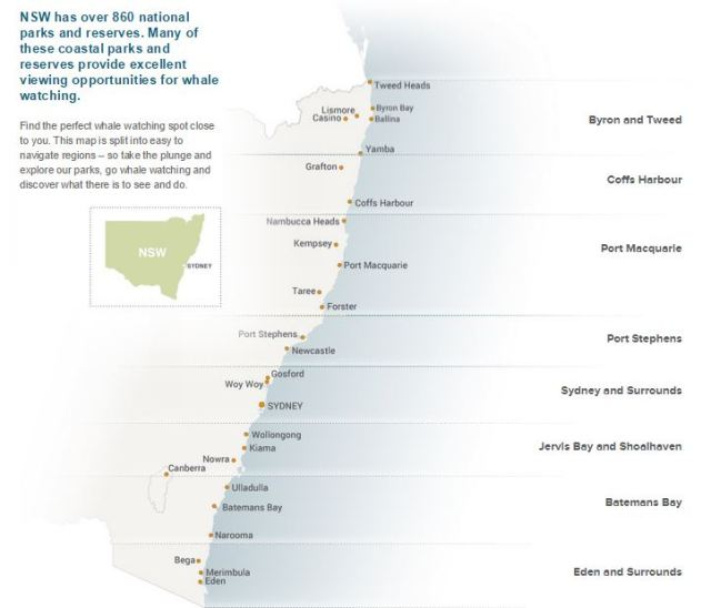 whale migratiion may to november east coast oz
