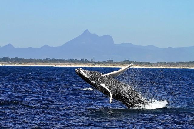Whale n Yar Birain