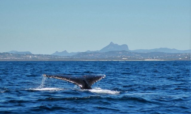 Yar Birrain n Whale Tail - 30 July 2018